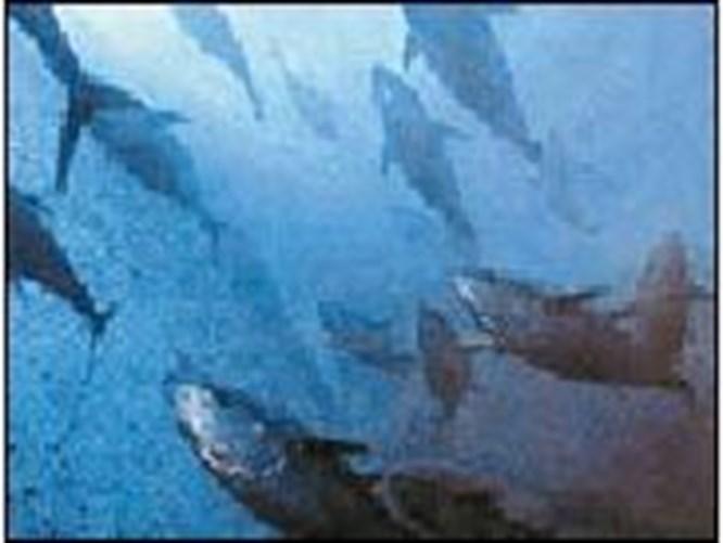 Tonbalığından tekzip